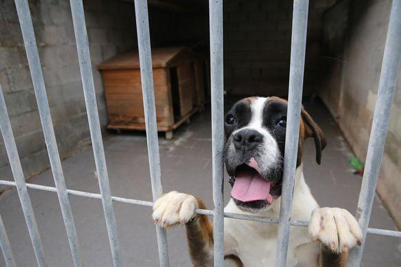 TIELT-Winge- Een hond uit het asiel.