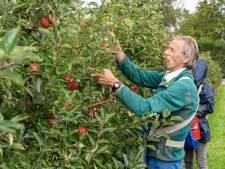 Pluk van vroege appels is begonnen: 'Bewaar ze in de koelkast, anders zijn ze zo weg'