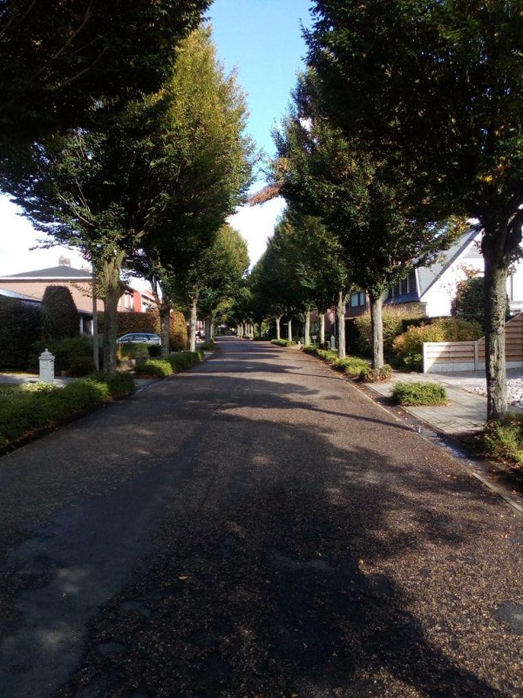 Niet alleen de voetpaden van In 't Eegdeken worden aangepakt. Ook de groenzones in de straten zullen heringericht worden.
