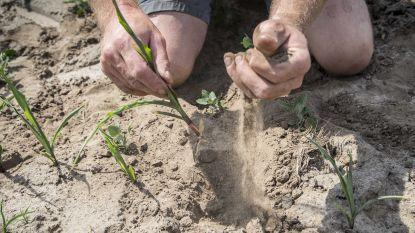 Grondwaterstanden in Vlaanderen verder gedaald in mei, landbouwers investeren steeds vaker in waterbesparing
