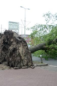 Rukwind blaast reusachtige boom met kluit en al om, tram en verkeer gestremd