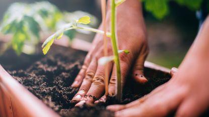 Waarom een paar uur tuinieren voor wonderen kan zorgen