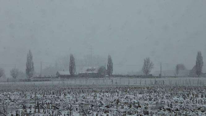 Eerste sneeuw zorgt voor dun sneeuwtapijt in Mandelstreek