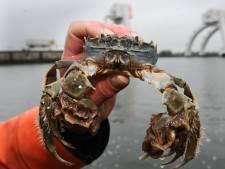 Vader en zoon Komen redden palingen van een wisse dood