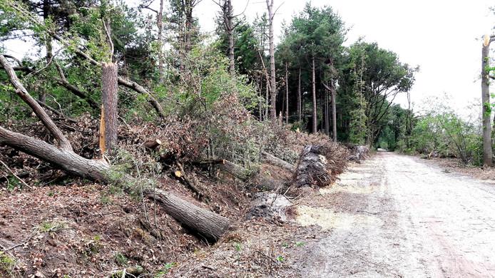 De valwind veroorzaakte eind juli grote schade aan het bos Visdonk.