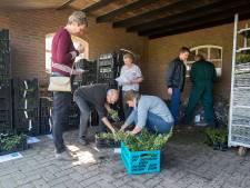 'Vergeten fruitsoorten' sieren tuinen in Gilze en Rijen