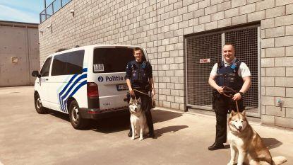 Husky's willen niet in hun kot blijven: politie brengt honden terug naar eigenaar