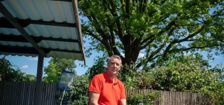 Inwoner Huissen komt met schadeclaim voor overlast van eikenprocessierups
