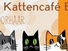 Kattencafé Familie Snorhaar in Breda gaat nu echt open