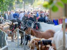 Pony- en paardenmarkt Enter: meer dan handel en handjeklap