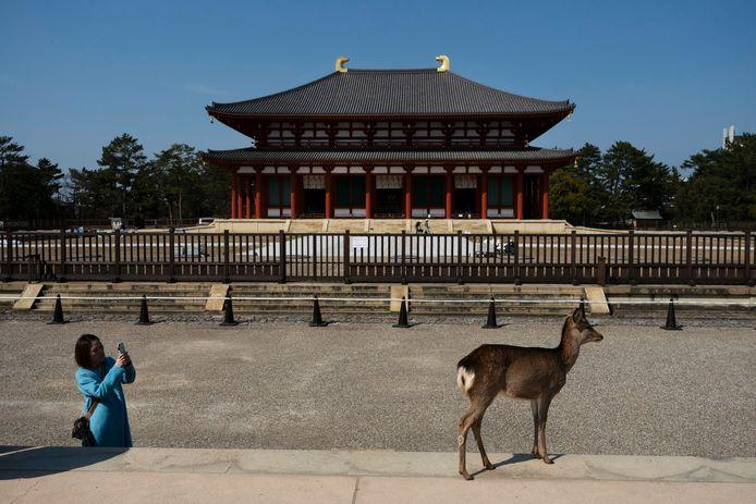 Een toeriste filmt een hert bij de Kofukujitempel in Nara.