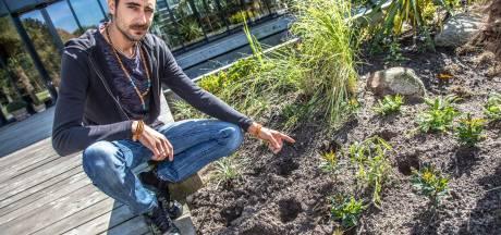 Voortuin Zwols Parkpaviljoen leeggeroofd: 'Mensen hebben er blijkbaar schijt aan'