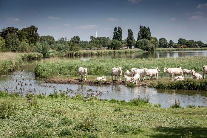 De waterschappen zijn onder meer verantwoordelijk voor het beheren van het waterpeil.