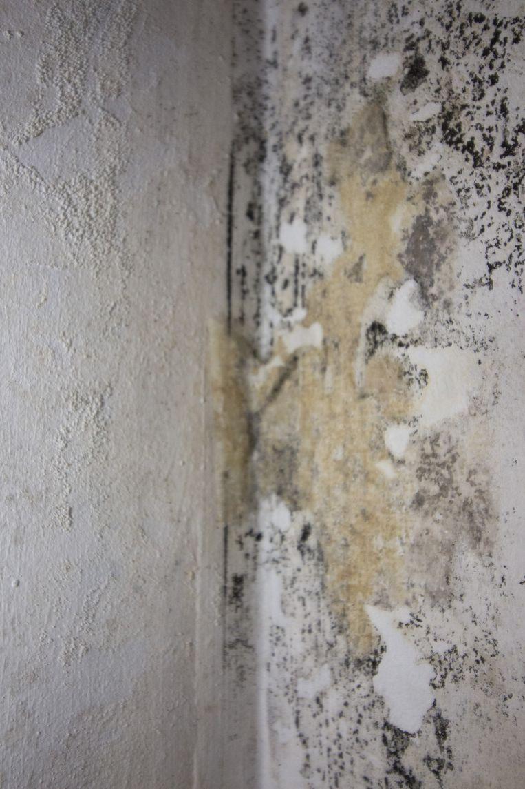 Het huurhuis hangt vol met dit soort vochtplekken en schimmel.