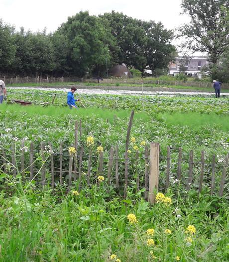 Voedseltuin Boxtel oogst veel lof: eerste vrijwilliger stroomt door naar vaste baan