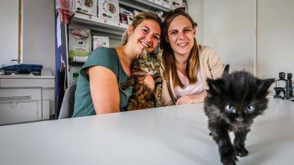 """Raisa (26) en team vangen al vier jaar zwerfkatjes op in Het Kittenhuis: """"Aantal stijgt jaar na jaar"""""""