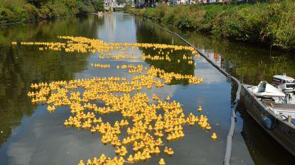 10.000 badeendjes in de Leie voor 'Duck Race Gent'