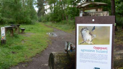 Boswachter waarschuwt voor agressieve buizerd: jogger loopt hoofdwonde op