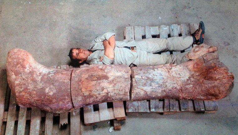 Een onderzoeker vrijdag naast het dijbeen van de reuzendino.
