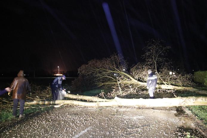 Agenten en buurtbewoners ontfermen zich over een boom op de Looiseweg in Gennep.