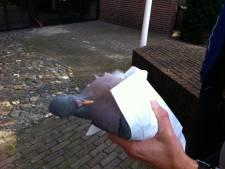 Bizarre vondst bij kano-tochtje: zak dode duiven in Vecht bij Hardenberg