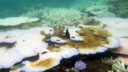 Koralen van Groot Barrièrerif die 'verbleking' overleven zijn resistenter