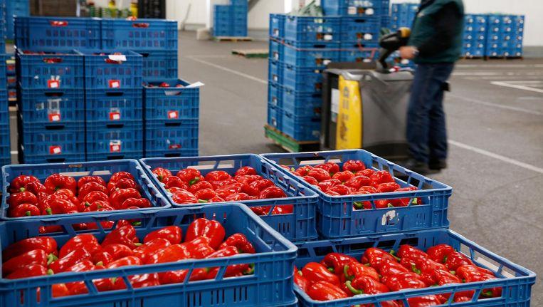 Paprika's gaan vaak naar China. Beeld Anp