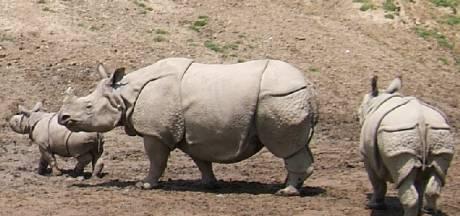 Dierenrijk Mierlo gaat voor neushoorns