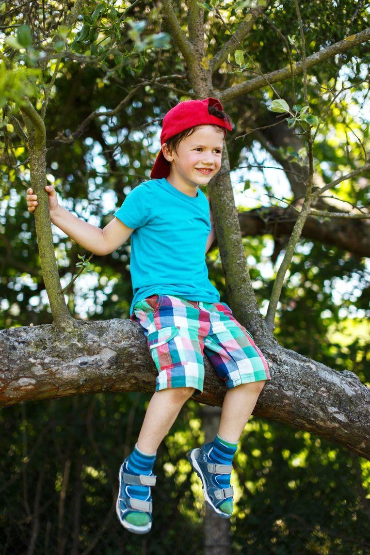 Onmisbaar in de tuin: klimboom