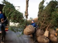 Britse bedrijven hamsteren om brexit: bomen vliegen de deur uit bij kwekers in Rivierengebied