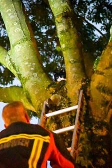 Brandweer rukt uit voor kat in de boom