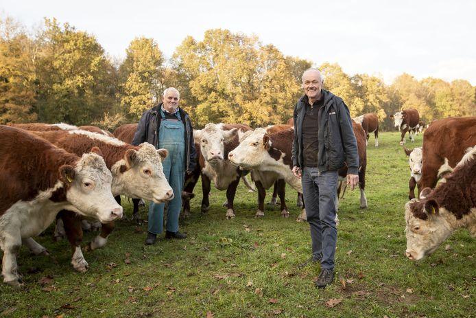 Natuurbegrazing Hasselerwönner laat Herefordrunderen grazen bij Zonnebeek en Buurserzand . Links Paul Rouwenhorst en rechts Ben ten Hag.