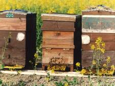 Bijenkasten gestolen in Dronten: 'Heel vervelend'