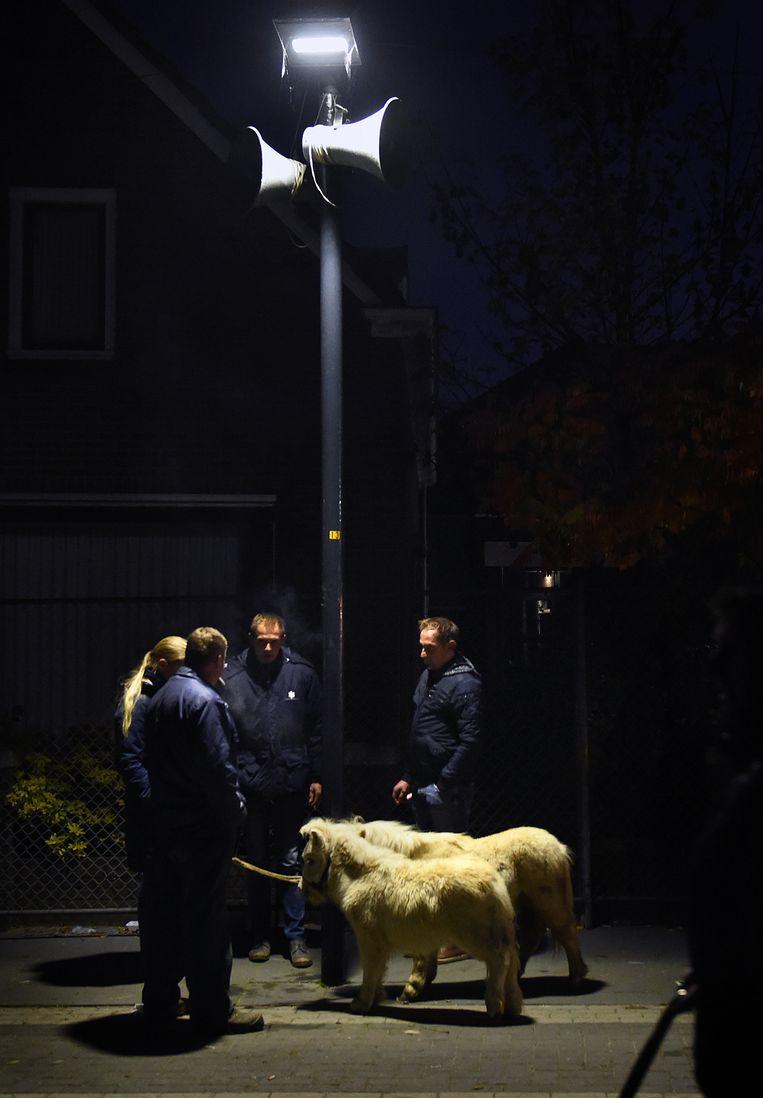 De paardenmarkt begint al in het donker Beeld Marcel van den Bergh