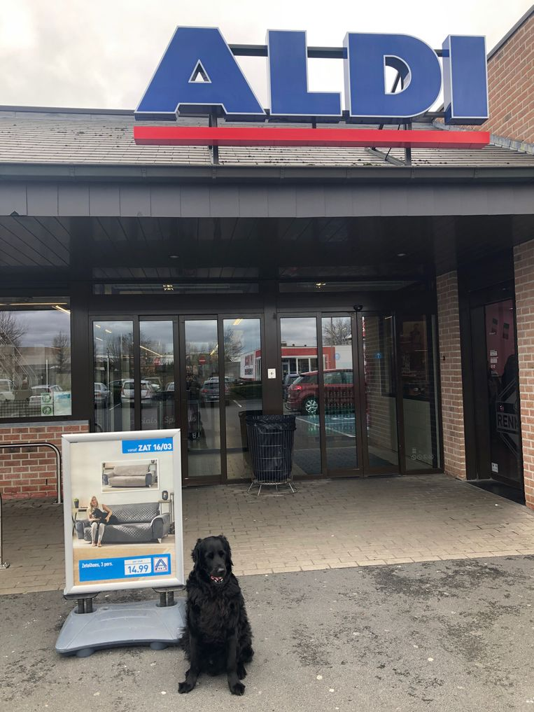 Als dit najaar de nieuwe folder voor winkelketen Aldi in je bus valt, zoek dan naar de zwarte hond op de zetel.