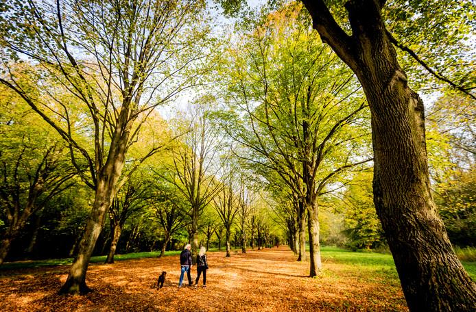 Zowel Roosendaal als Halderberge krijgen er in de loop van volgend jaar mini-bossen bij. Samen met nog eens zes andere Brabantse gemeenten krijgen zijn hier subsidie voor van de provincie Noord-Brabant.