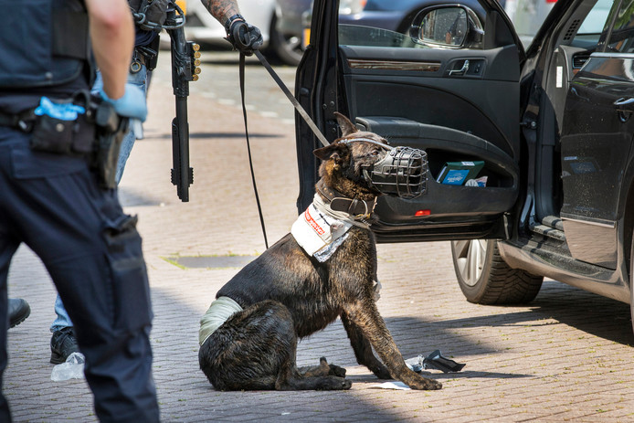 De politiehond, die gisteren in actie kwam toen een Syriër met een bijl in Schiedam zwaaide, is overleden.