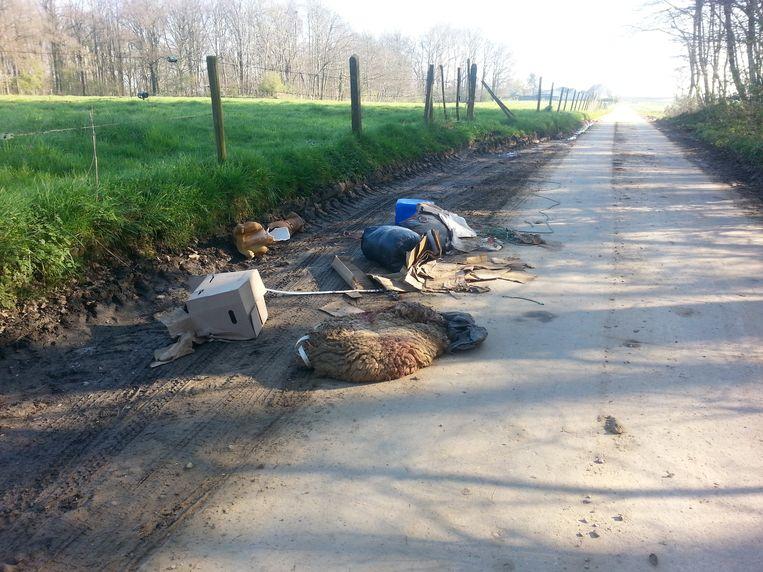 De sluikstorter dumpte zelfs het kadaver van een schaap langs de kant van de weg.