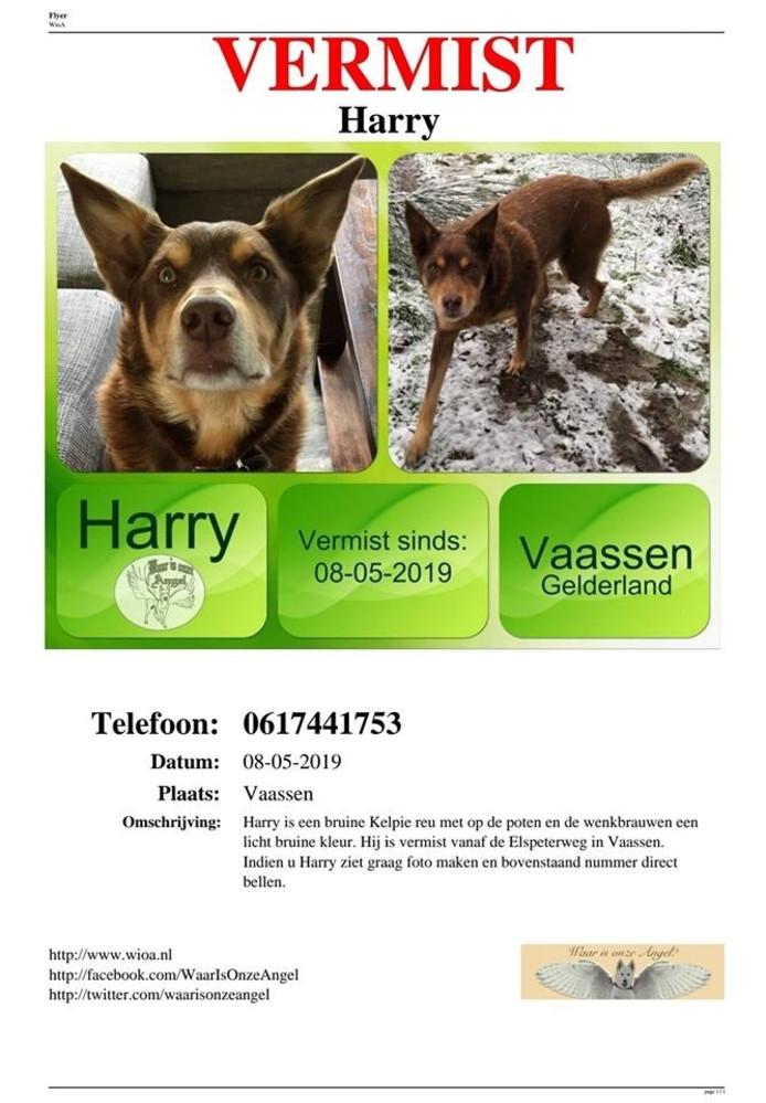 Hond Harry was al sinds woensdag vermist. De afloop is triest: hij is verdronken.