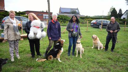Trouwe viervoeters testen gloednieuwe hondenlosloopweide uit
