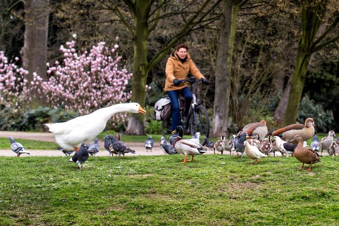 Nu de temperaturen stijgen, lonkt het park. Zwolle heeft behoorlijk wat ruimte te bieden: 14,43 vierkante meter park per inwoner.