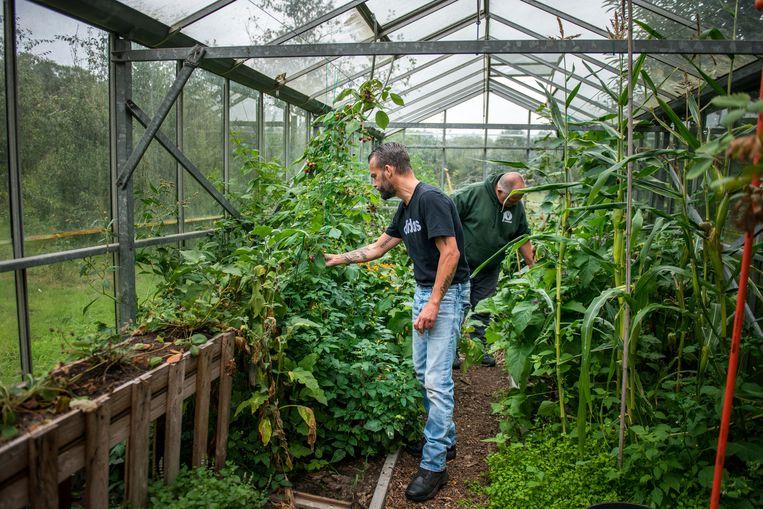 Veteranen Marco en Erik verzorgen de planten in de kas en plukken fruit en groenten. Beeld Linelle Deunk