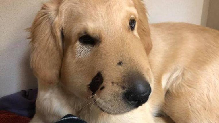 Todd de hond