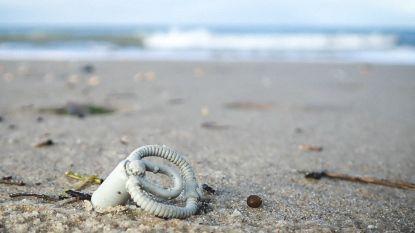 """23 jaar na containerramp spoelt nog steeds LEGO aan op de Belgische stranden: """"Ik droom stiekem nog een draak en octopus te vinden"""""""