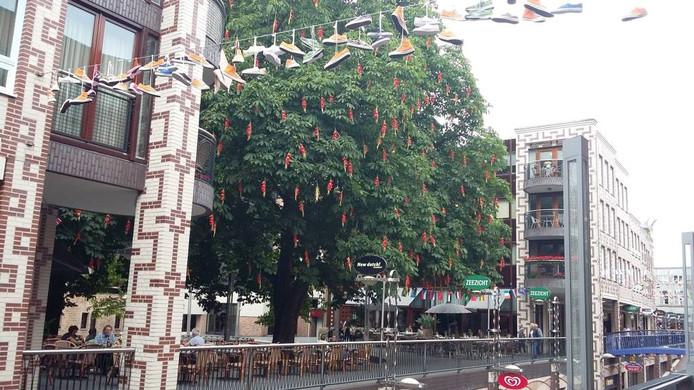 Gladiolen in boom aan de Marikenstraat.