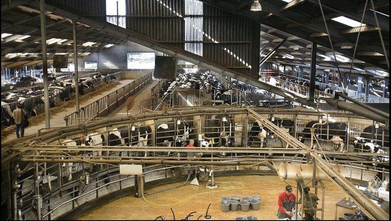 Nederlands grootste melkveebedrijf in Vredepeel. Beeld Maarten Hartman, HH