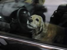 Dronken Nederlanders laten hond stikken in snikhete auto in Cannes