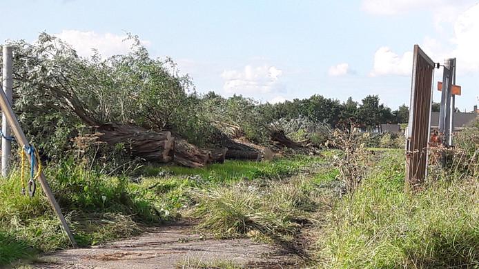 Gekapte bomen op het terrein waar Nudepark 2 moet komen.