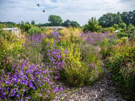 Bloemen, bietjes en bijen boeien: ledenstop bij Zwolse volkstuinclub