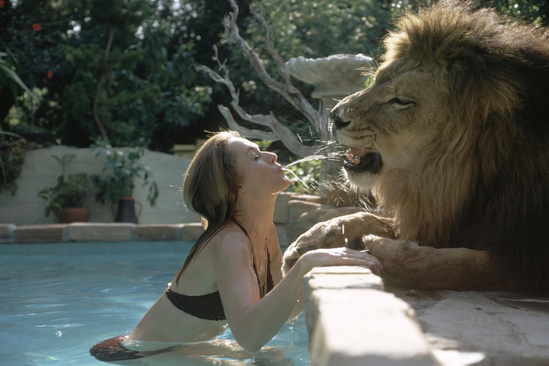 Actrice Tippi Hedren bij het zwembad met een van de leeuwen die bij het gezin woonden.  Beeld Foto the Life Picture Collection via Getty Images